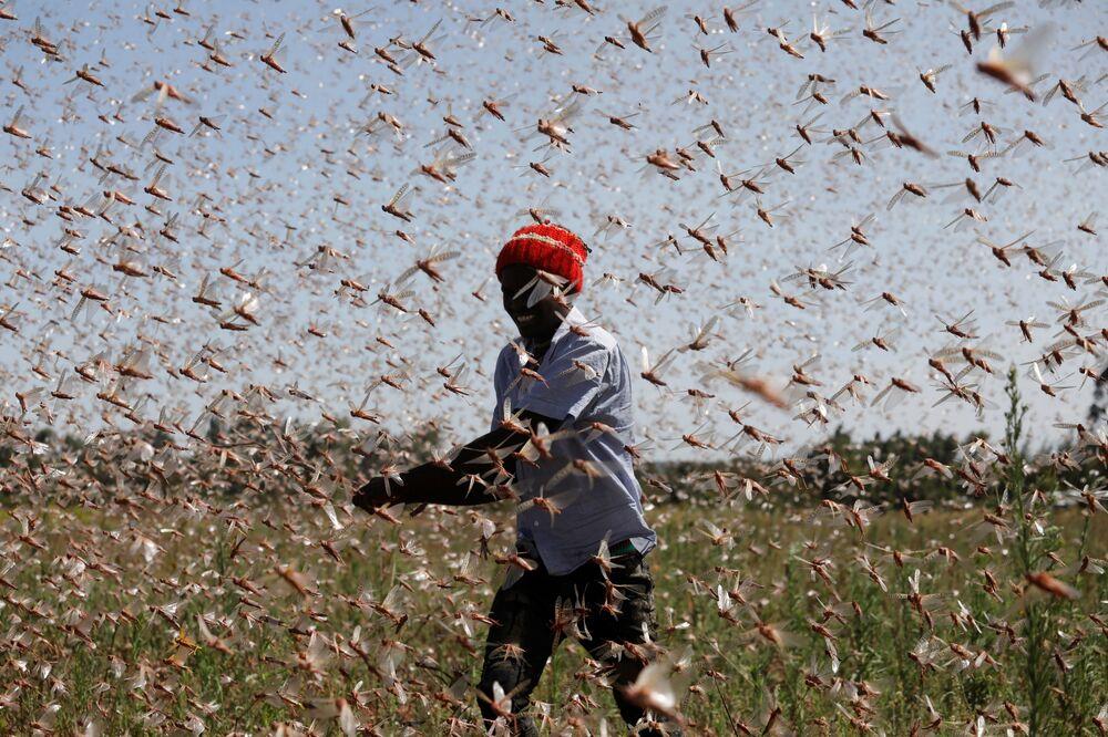Homem tenta afastar enxame de gafanhotos do deserto de uma fazenda, perto da cidade de Rumuruti, Quênia, 1º de fevereiro de 2021