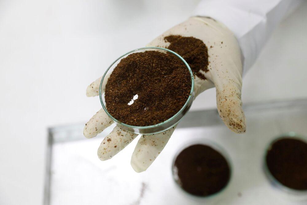 Gerente de laboratório segura prato contendo gafanhotos do deserto terrestre no laboratório Spectralab, em Nairóbi, Quênia, 16 de fevereiro de 2021