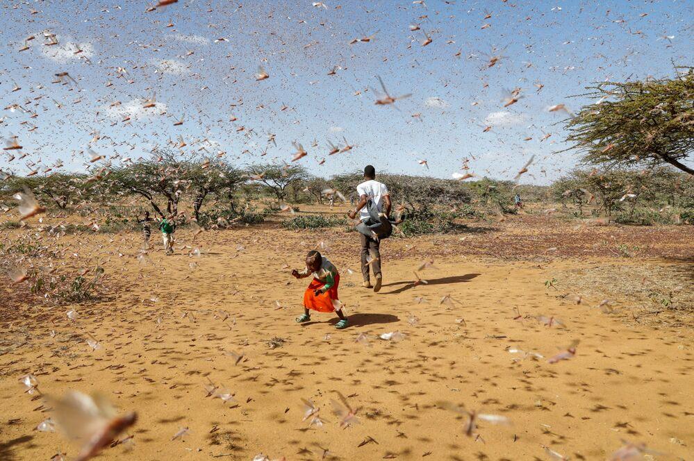 Criança tenta afugentar enxame de gafanhotos do deserto em Naiperere, Quênia, 30 de janeiro de 2021