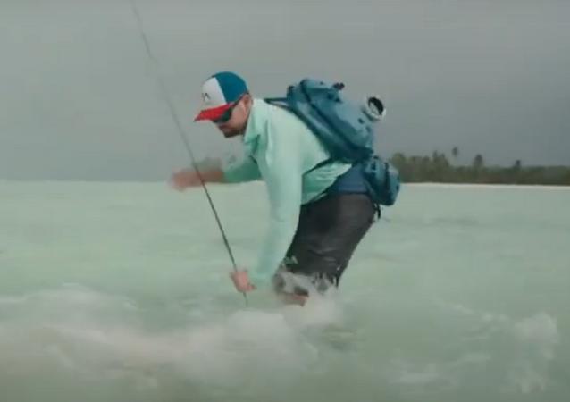 Tubarão ataca pescador