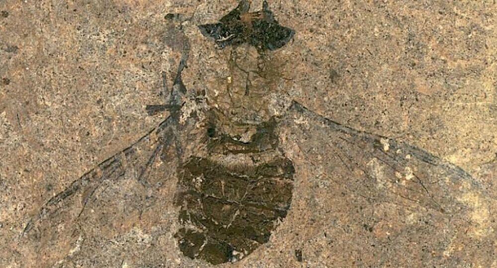 Fóssil de mosca de 47 milhões de anos encontrado na Alemanha