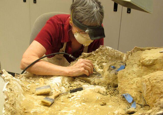 Anne Teppo trabalha em um fóssil de dinossauro