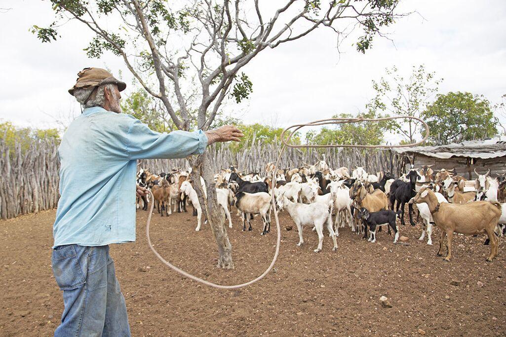 Criação de animais foi facilitada com a instalação de cisternas no semiárido brasileiro.