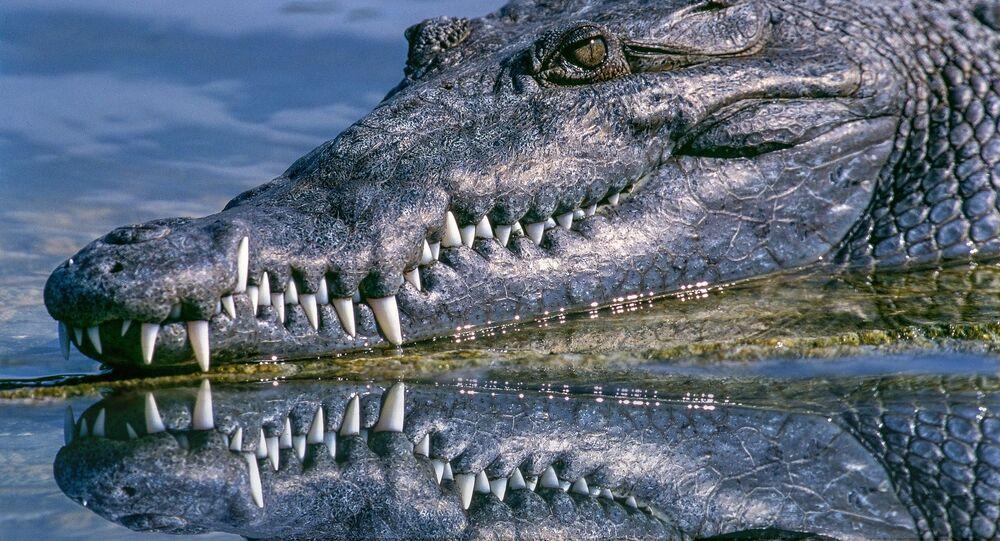 Crocodilo (foto de arquivo)
