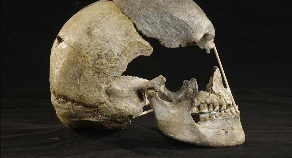 Crânio de Zlaty Kun de cerca de 45 mil anos, na República Tcheca (imagem ilustrativa)