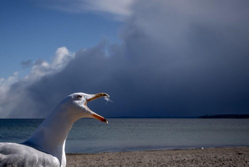 Gaivota grita no mar Báltico, Alemanha, 6 de abril de 2021