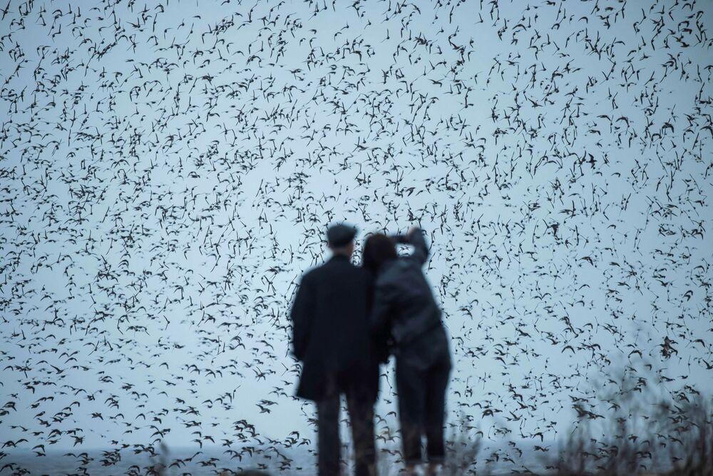 Pessoas observam aves migratórios na província de Liaoning, nordeste da China, 4 de abril de 2021