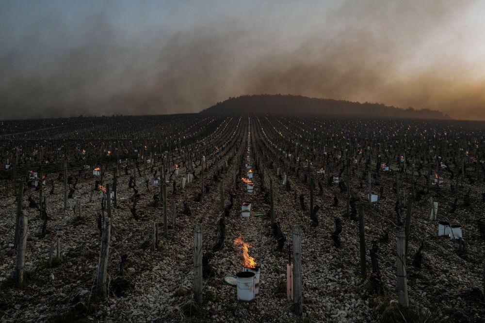 Velas contra geada ardem ao nascer do sol no vinhedo de Daniel-Etienne Defaix, França, 7 de abril de 2021, já que as temperaturas caíram abaixo de zero durante a noite