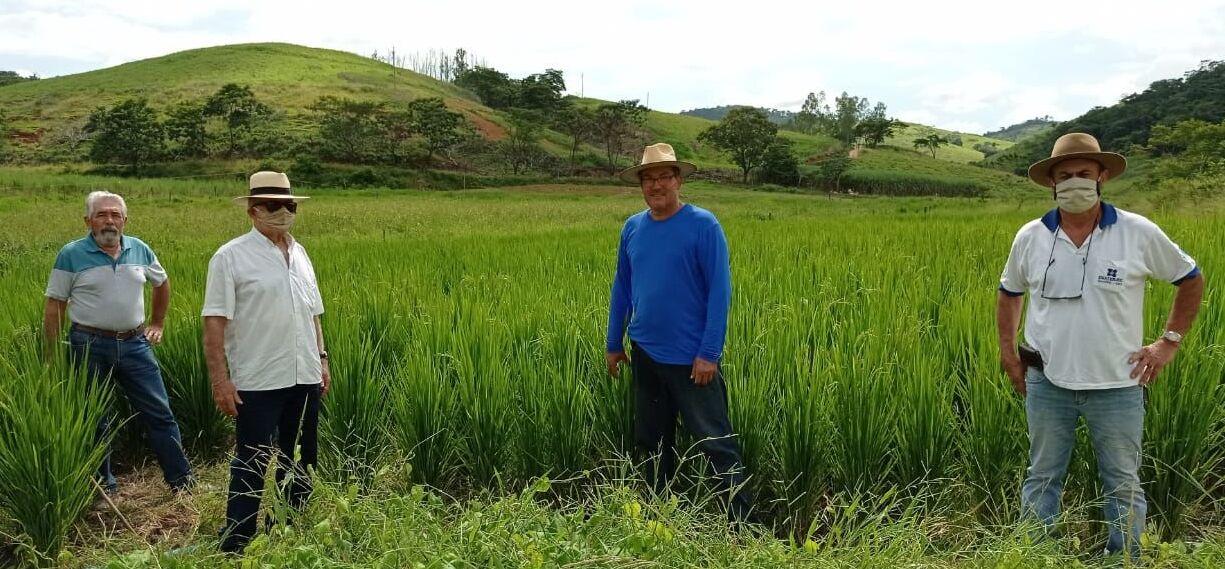 Agricultores de arroz gourmet na cidade de Italva, Região Noroeste do Rio de Janeiro.