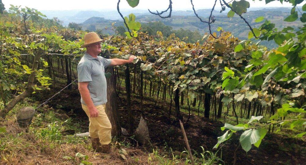 O produtor Raimundo Zucchi, em sua propriedade na Linha Eulália, zona rural de Bento Gonçalves, onde planta sete variedades de uva.