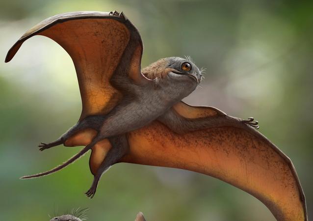 Representação artística de Sinomacrops bondei