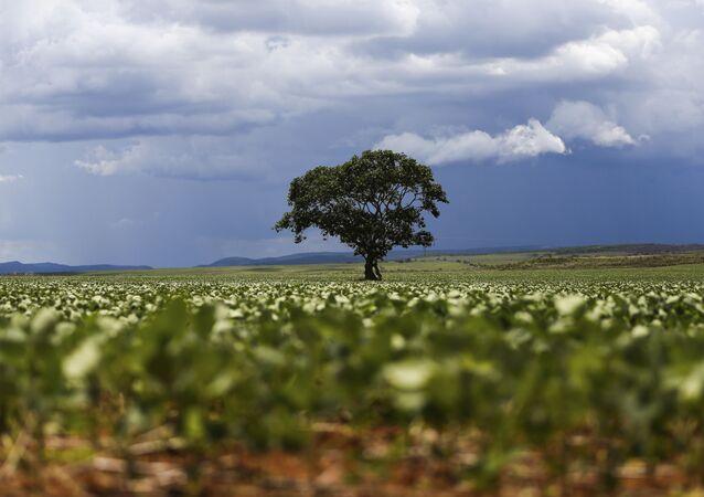 Plantação de soja em área do  município de Alto Paraíso, em Goiás.