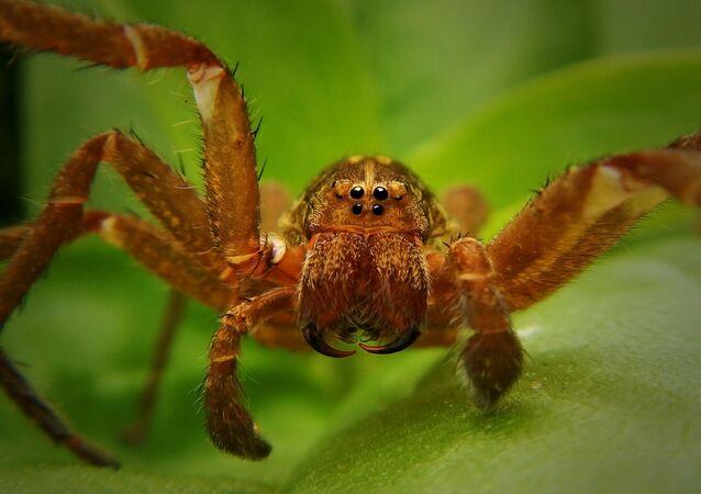 Espécie de aranha (imagem referencial)