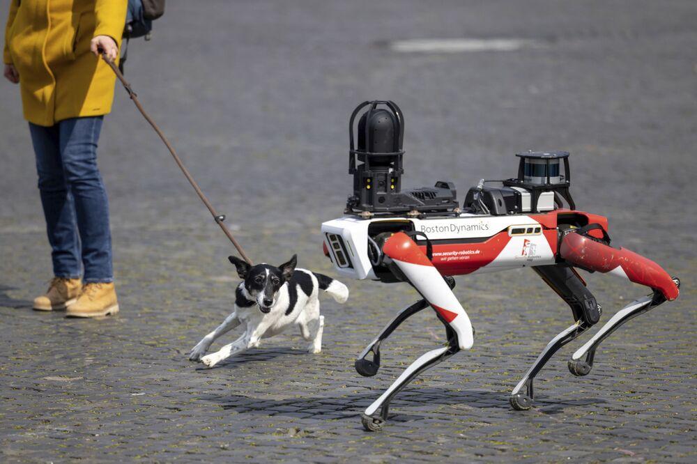 Spot, um robô com movimentos parecidos aos de um animal, passa por um cachorro na Praça de Catedral em Erforte, Alemanha, 20 de abril de 2021
