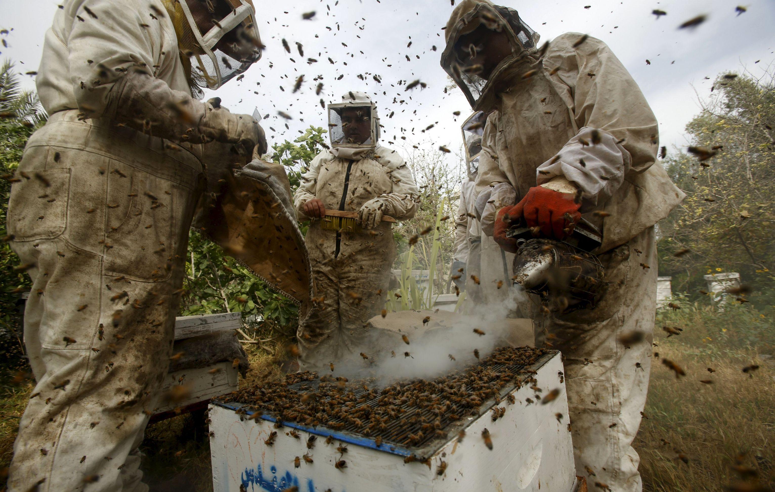 Apicultores extraindo mel