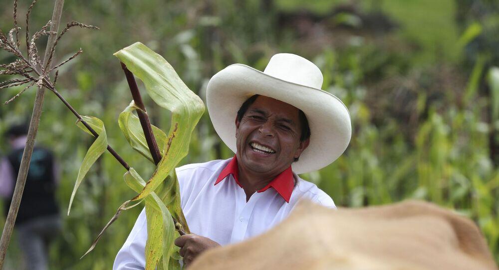Pedro Castillo segura um talo de milho em sua propriedade em Chugur, Peru, em 15 de abril de 2021