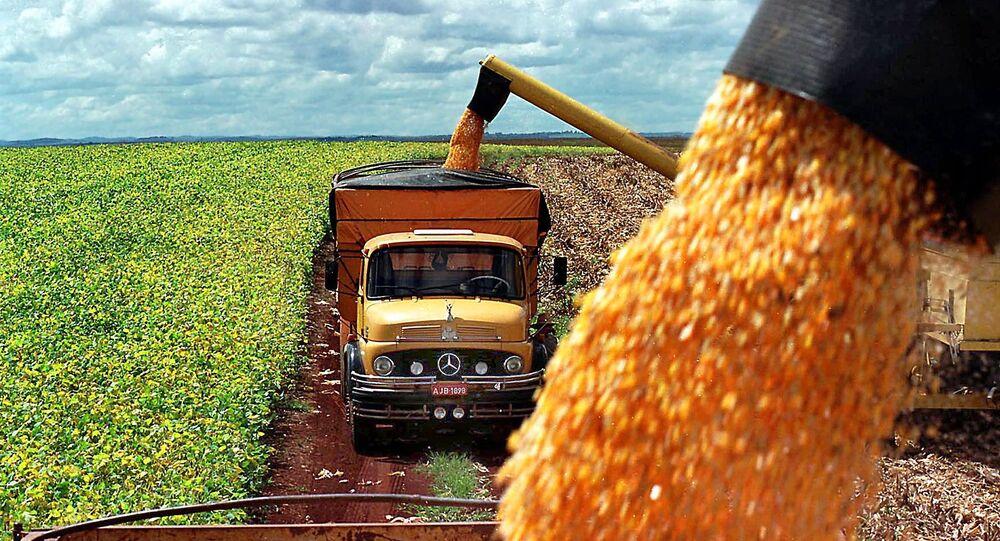 Produção de milho de uma fazenda é carregada em caminhões, na cidade de Guarapuava, no Paraná
