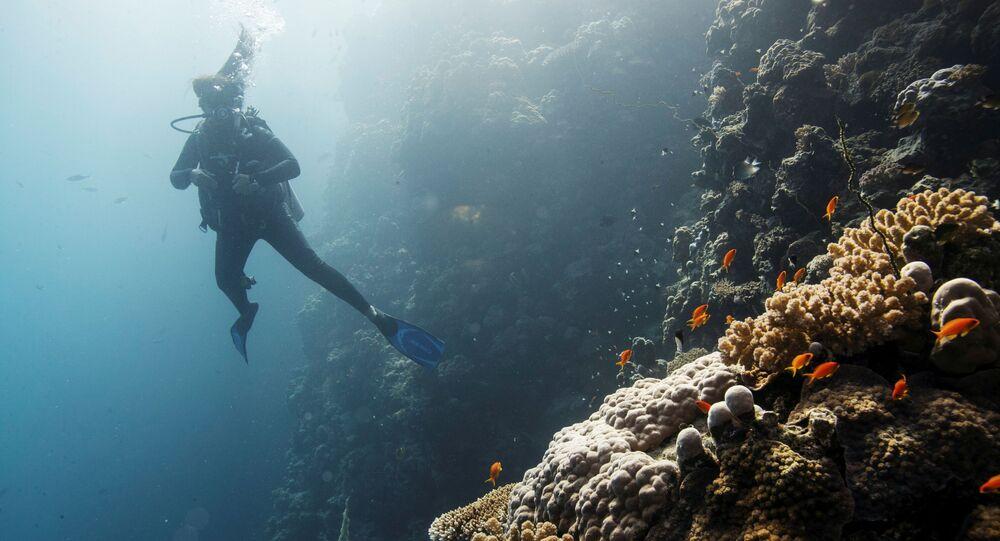 Mergulhador nada acima de um recife de coral no mar Vermelho ao largo da Universidade de Ciência e Tecnologia Rei Abdullah, perto da cidade de Jidá, na Arábia Saudita, 17 de dezembro de 2019