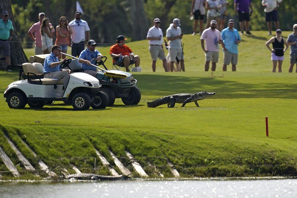 Organizadores de torneio de golfe acompanham em carrinhos de golfe um jacaré até a água, estado de Louisiana, EUA, 24 de abril de 2021