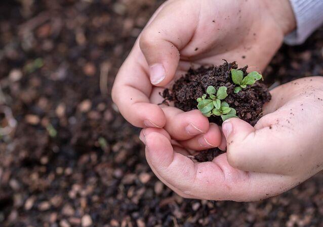 Sementes sendo plantadas (imagem referencial)