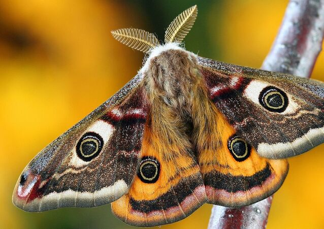 Mariposa (imagem referencial)