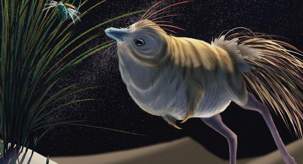 O pequeno dinossauro Shuvuuia deserti em uma reconstrução artística de 2021, realizada pela Universidade de Witwatersrand, em Joanesburgo, África do Sul