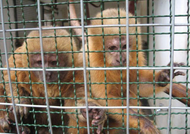 Foto de arquivo de animais enjaulados tirada em 7 de fevereiro de 2008