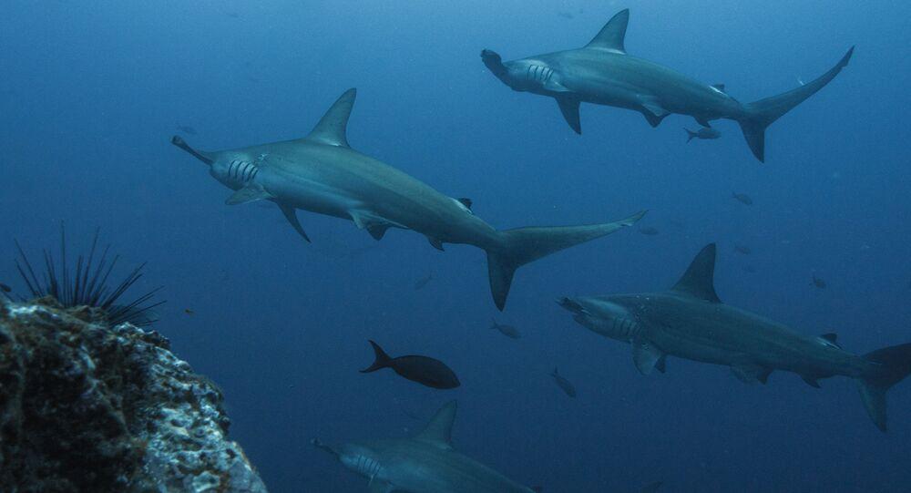 Tubarões (imagem referencial)