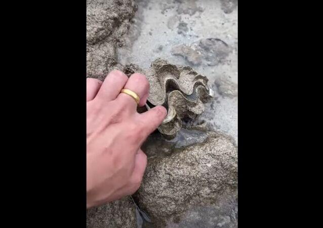 Mulher tenta abrir concha para ver o que está dentro e apanha susto