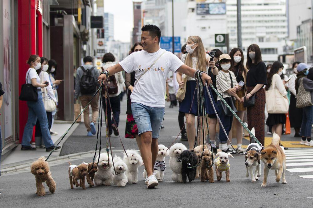 Passeador de cães profissional atravessa estrada em Tóquio, Japão