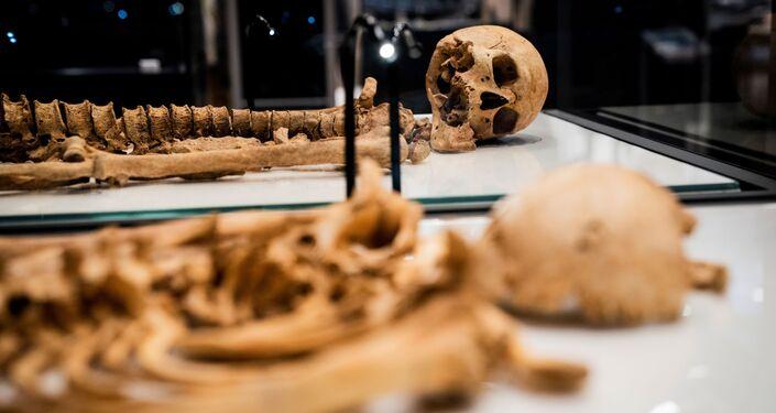 Esqueletos de dois guerreiros vikings da mesma família exibidos no Museu Nacional da Dinamarca