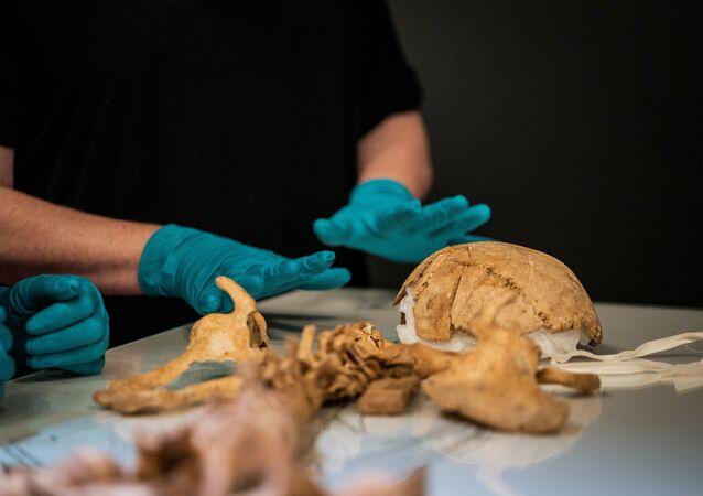 Esqueleto de um viking encontrado em Oxford, Reino Unido, sendo analisado no Museu Nacional da Dinamarca