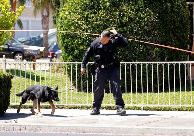 Polícia e cão revistam área em que aconteceu tiroteio (imagem ilustrativa)