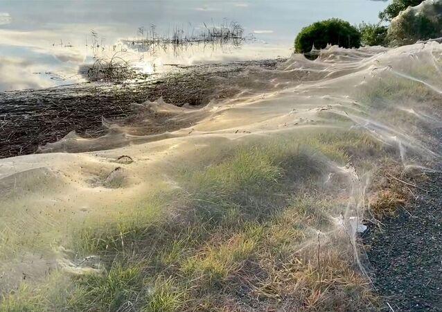 Teias de aranha cobrindo a Austrália após inundações