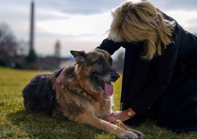 Primeira-dama dos EUA, Jill Biden, faz carinho em um dos cães da família, Champ. Foto de arquivo
