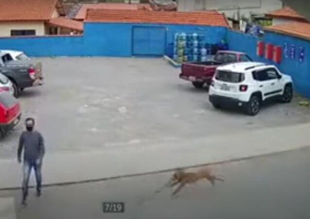 Cachorro prestes a derrubar homem no México