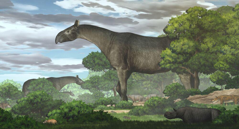 Ilustração artística de rinoceronte pré-histórico Paraceratherium linxiaense