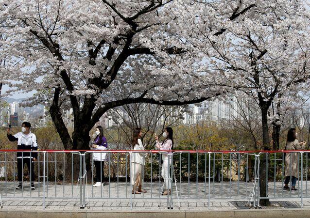 Pessoas tiram fotos ao lado de árvore em floração durante a pandemia, Coreia do Sul
