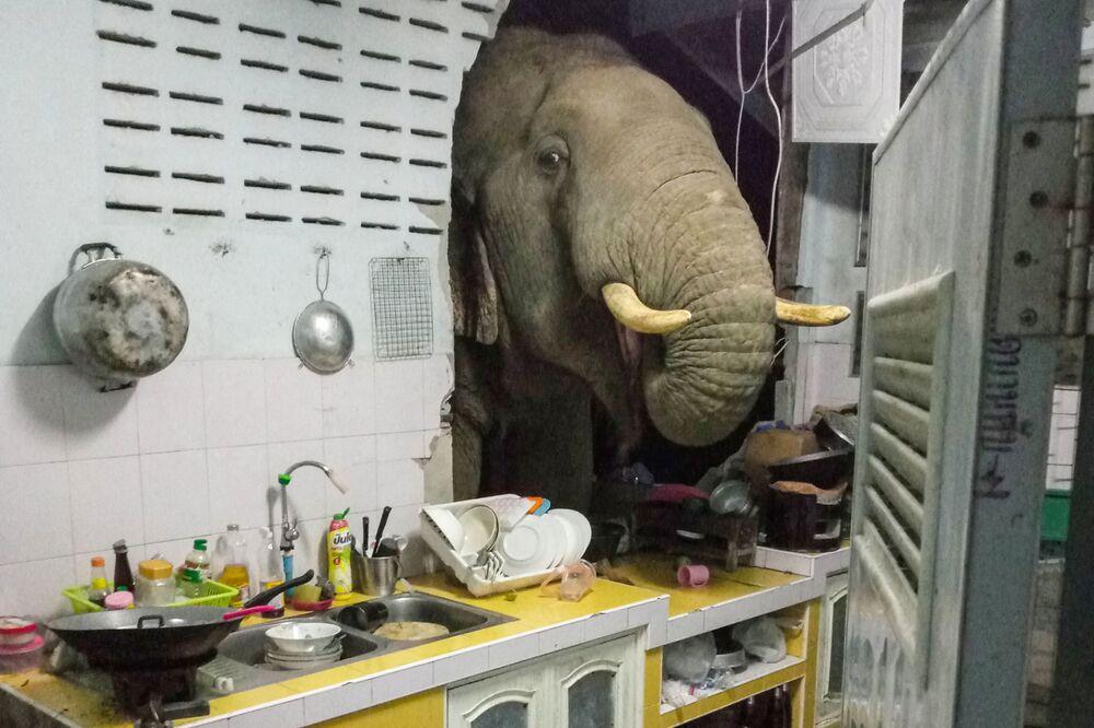 Elefante procurando comida na cozinha de casa residencial em Pa La-U, província de Hua Hin, Tailândia, 20 de junho de 2021