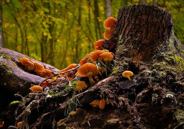 Fungos (imagem referencial)