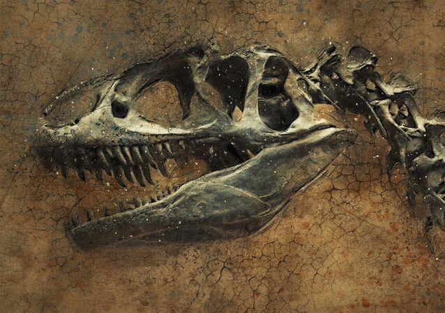 Crânio de dinossauro (imagem ilustrativa)