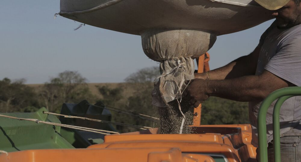 Produtores rurais de Campo Mourão, região Centro-Oeste do Paraná, Brasil, iniciaram o plantio de soja com a expectativa de uma boa produção de grãos,  29 de setembro de 2019