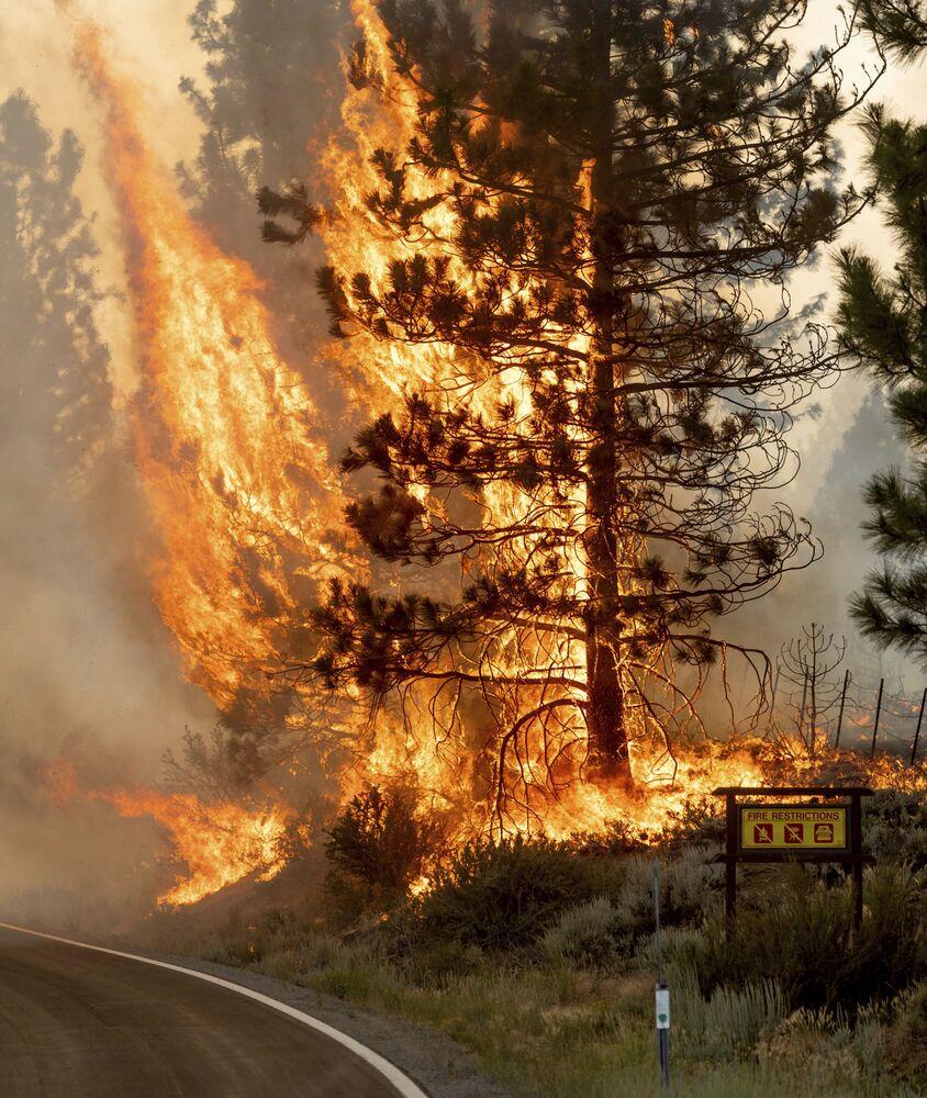 Incêndio arde na Floresta Nacional de Plumas, Califórnia, EUA, 9 de julho de 2021