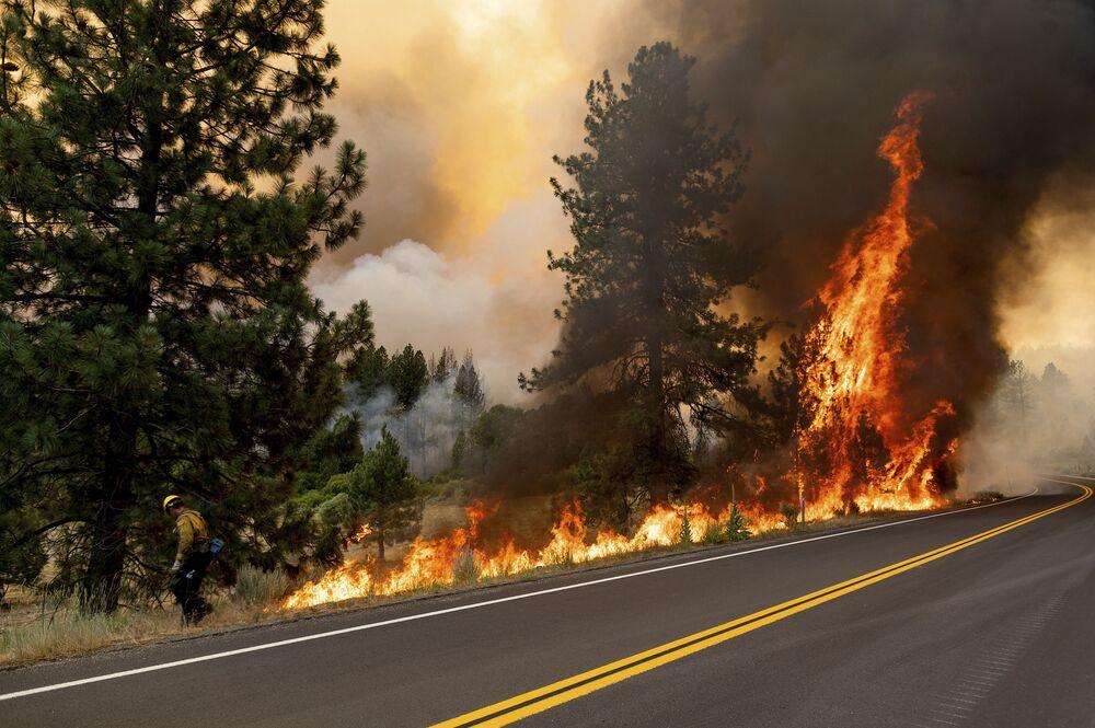 Bombeiro queima vegetação para evitar propagação do incêndio à Floresta Nacional de Plumas, Califórnia, EUA, 9 de julho de 2021
