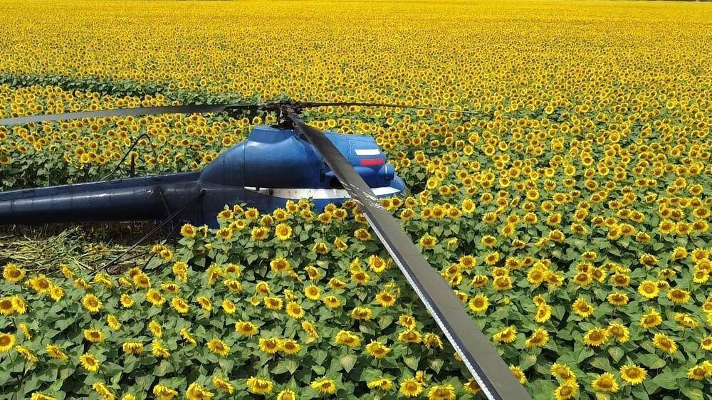 Pouso de emergência de um helicóptero Mi-2 na república de Cabardino-Balcária, Rússia