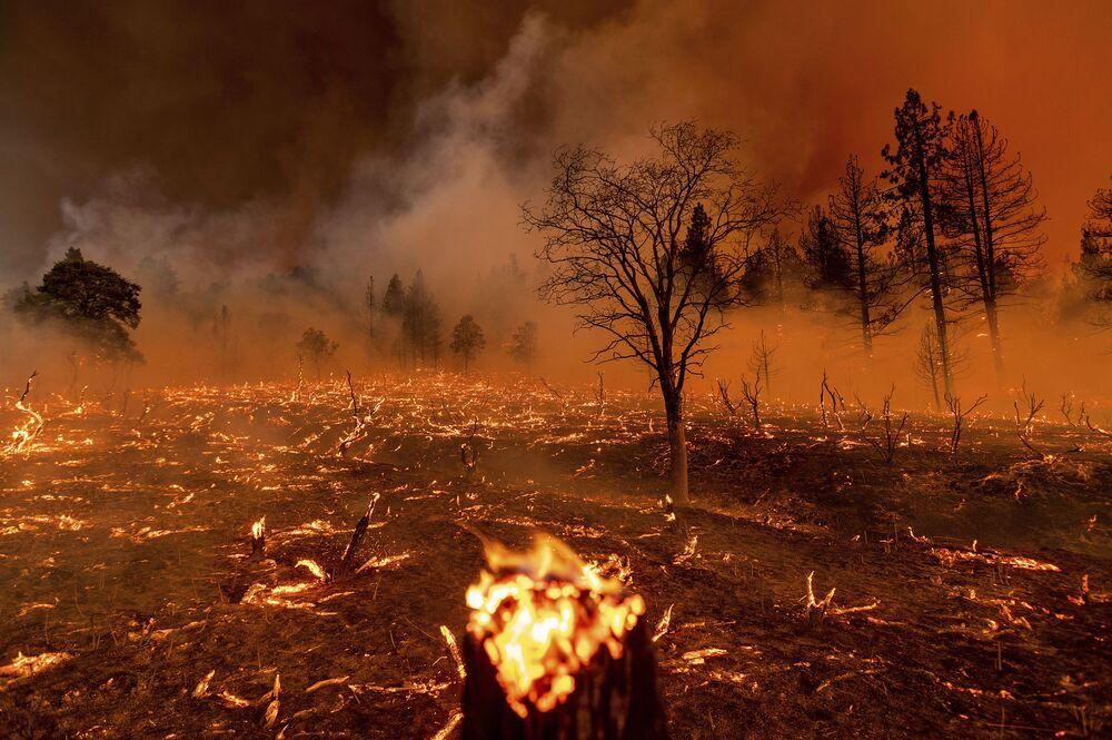 Fumaça envolve árvores em meio ao incêndio na área de Doyle, Califórnia, EUA, 9 de julho de 2021