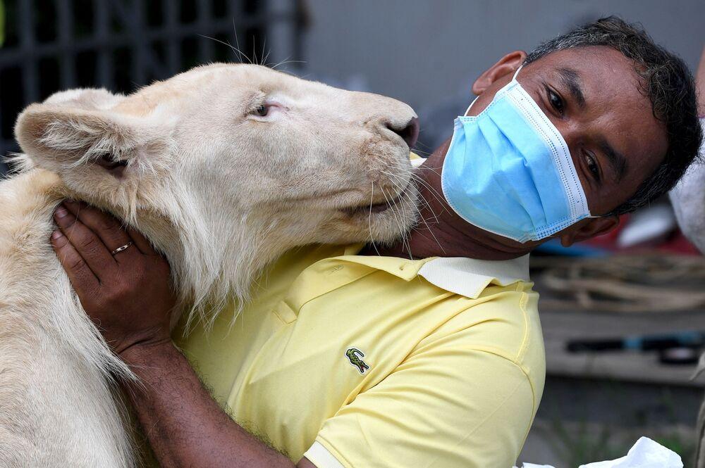Trabalhador de zoológico no Camboja abraça leão Hima