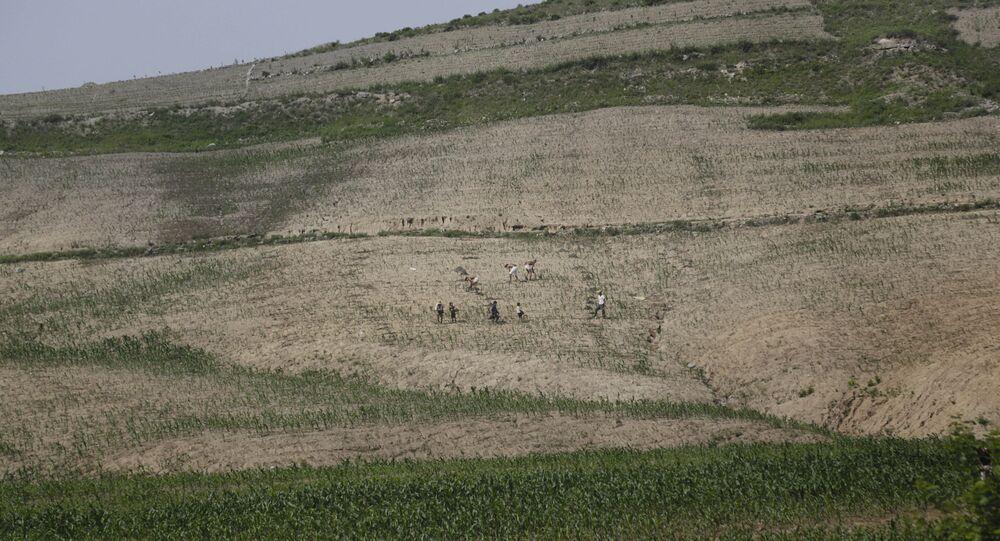 Agricultores trabalhando em campo de milho na Coreia do Norte (foto de arquivo)