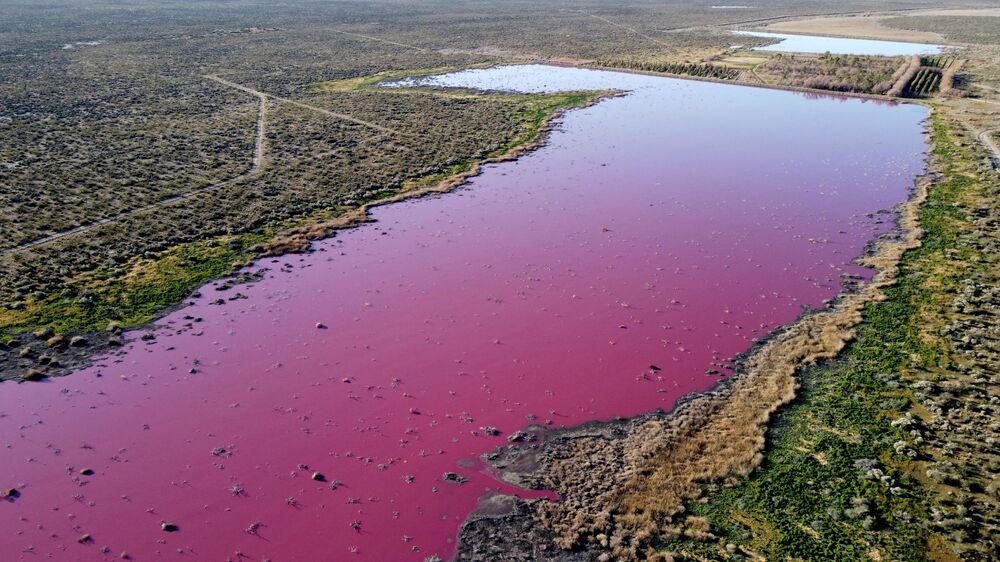 Laguna que virou rosada devido aos produtos químicos usados para conservar camarões nas fábricas de pesca perto de Trelew, Patagônia, Argentina, 23 de julho de 2021
