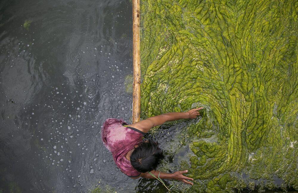 Trabalhador retira algas de lago, em Katmandu, no Nepal, 27 de julho de 2021